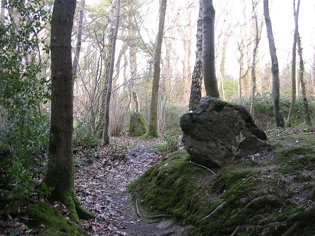 Part of the Rempstone stone circle in birch woodland, Purbeck