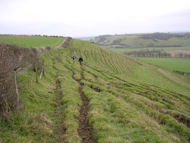 Nordon Hill, west of Melcombe Bingham