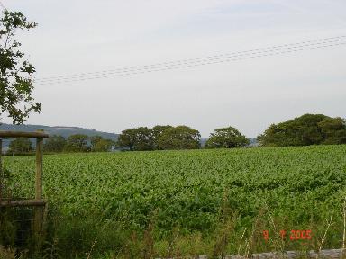 Crops at Tyn Y Coed