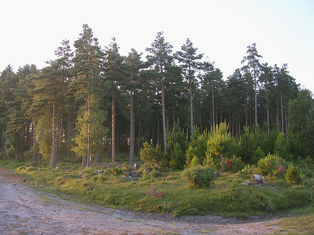 Trees in the Longdown Inclosure, New Forest