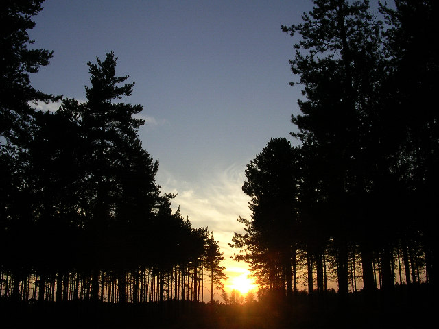 Sunset in the Longdown Inclosure, New Forest