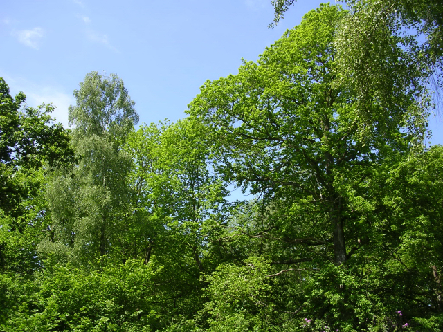 Trees in Breamore Wood, Breamore