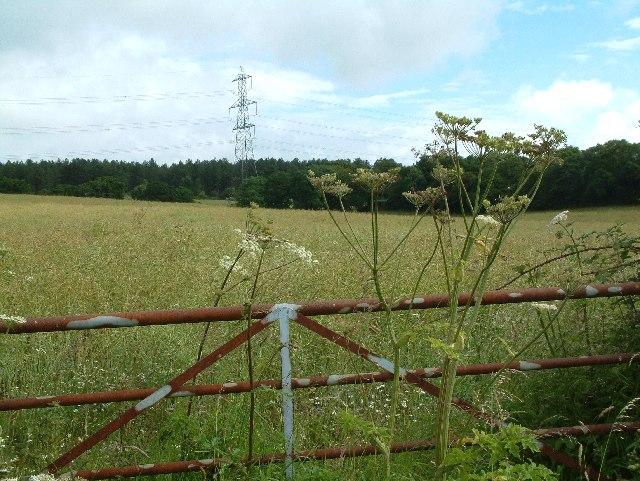 Farmland, Pallington, Dorset