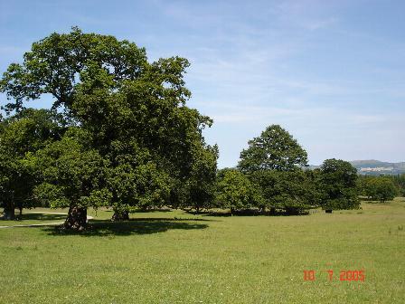 Kinmel Park