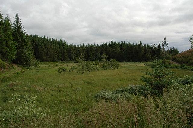 Overgrown Loch...