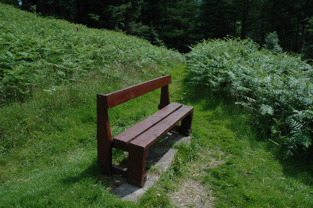 Bench along the forest trail of Craigieburn Hill