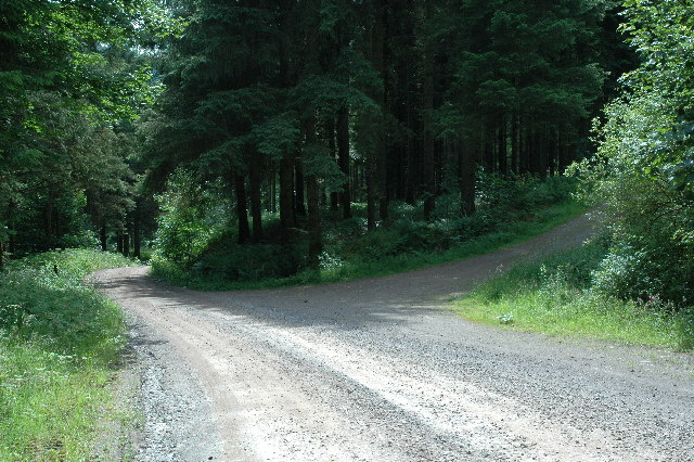 Junction of forest track near Moffat.