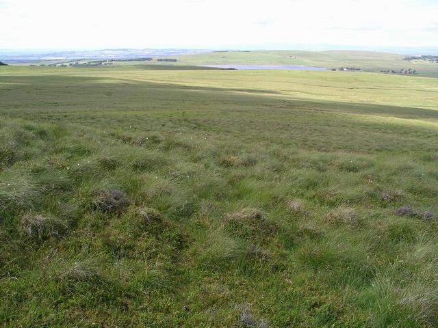 Moorland tussocks