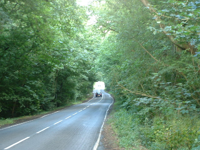 Road through woodland at Horse Hill