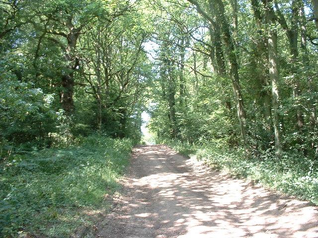 Tree lined bridleway near Ewood Farm