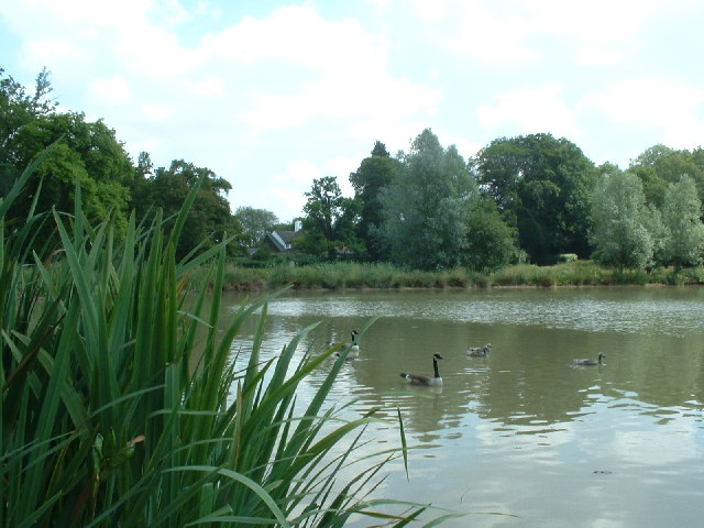 Fourwents Pond, Holmwood Common