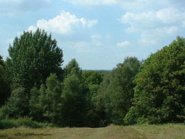 Viewpoint at Holmwood Common
