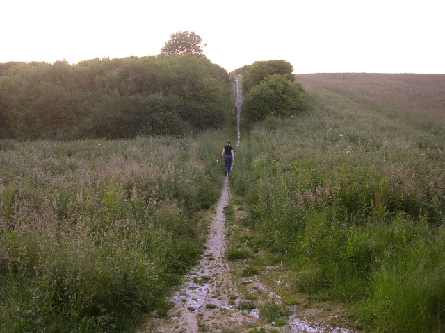 The Pilgrim's Trail on Twyford Down at dusk