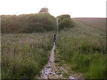 SU4926 : The Pilgrim's Trail on Twyford Down at dusk by Jim Champion
