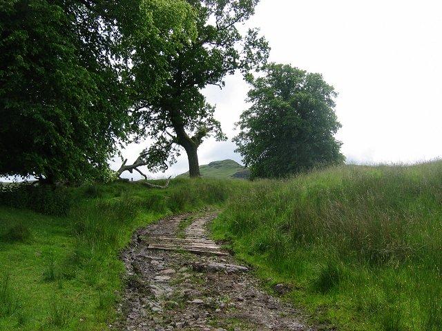 Old wooden trackway, Jerah
