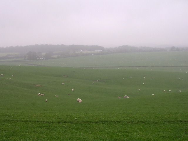 Sheep grazing in Horton Hollow