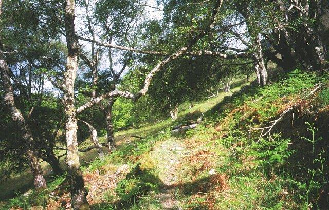 Woods, Loch Maree