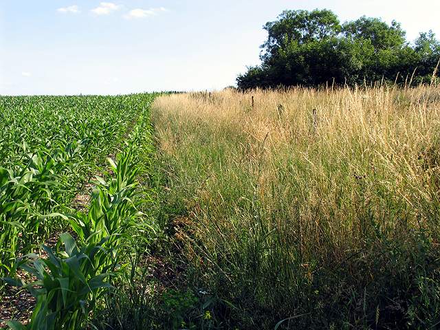 Farmland near Brimpton