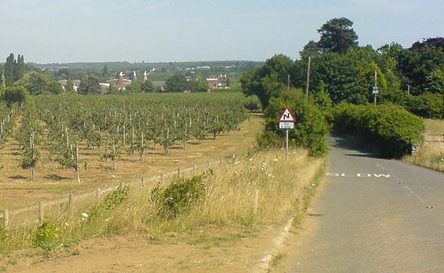 Kentish Orchard