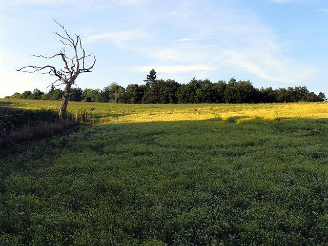 Field near Brimpton