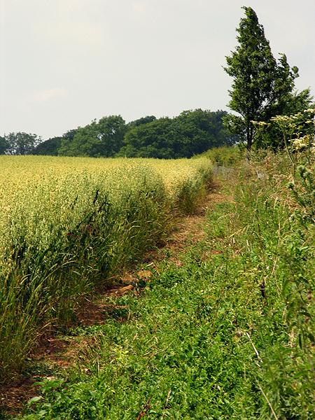 Farmland near Shefford Woodlands