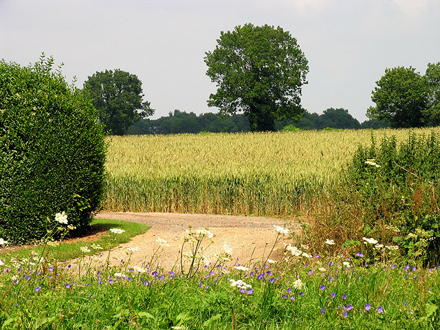 Farmland at Woodlands St Mary