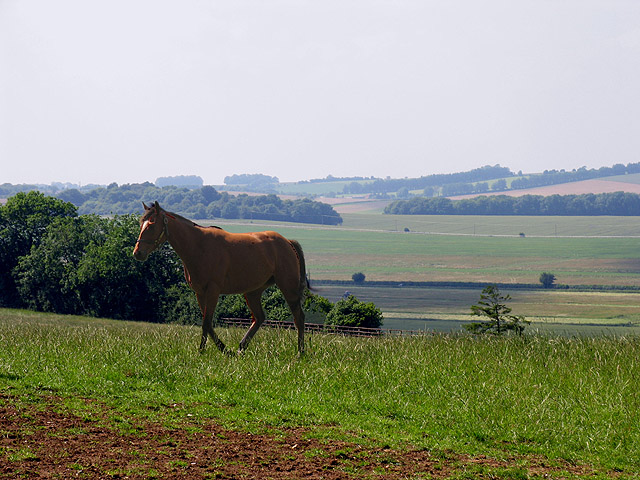 Race Horse Paddock on Farmland at Kingwood Stud