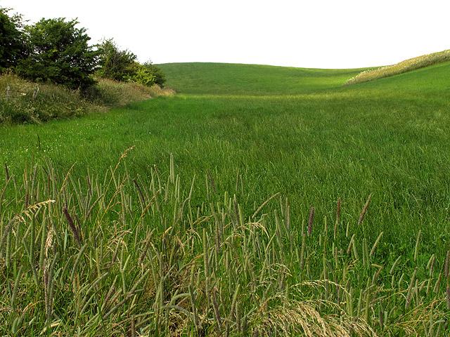 Barley Field near Upper Lambourn