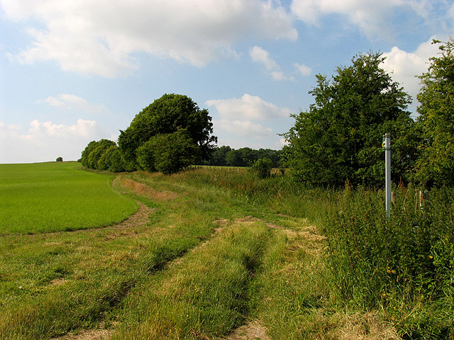 Footpath Across the Barley Field near Ashdown Park