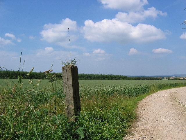 Scawton Moor Plantation