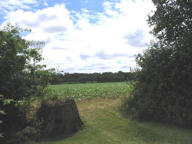 Cabbage Field, Sandpit Lane, Pilgrims Hatch, Essex