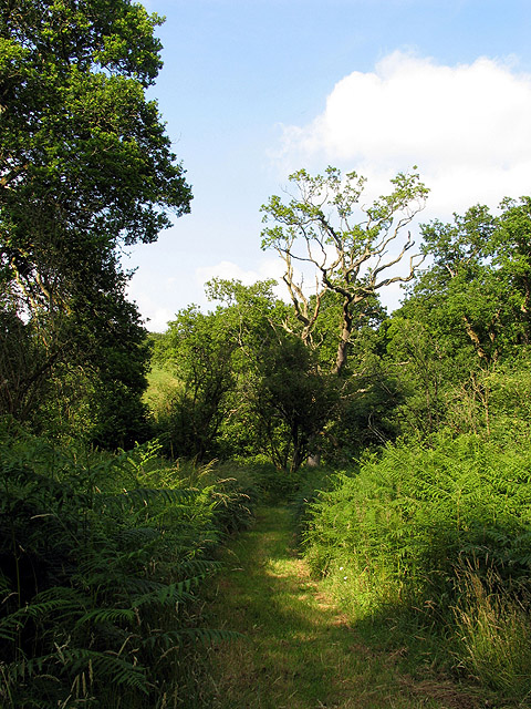 Path in Middle Wood
