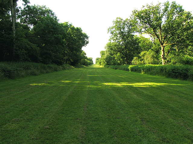Mown Avenue at Ashdown House