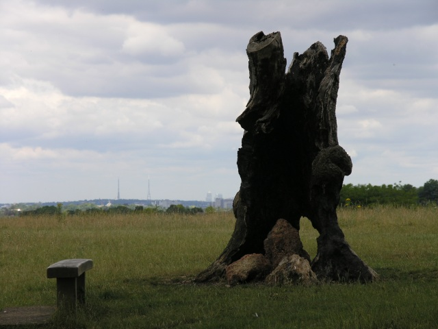 Old stump with a view