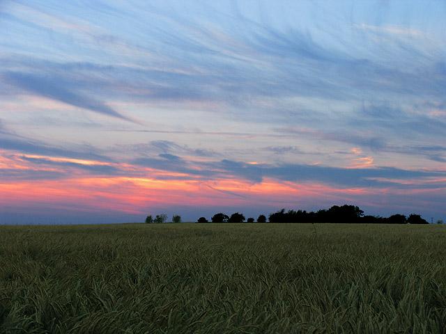 Barley Field at the Radio Station