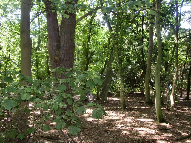 Woods on Remenham Hill