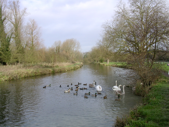 Feeding ducks and swans, the Itchen Navigation north of Tun Bridge, Winchester