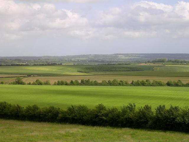 Danebury Down