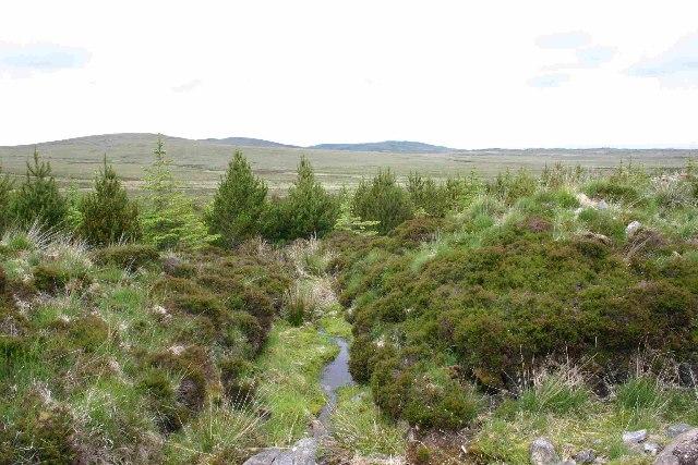 Burn running through plantation, North Uist
