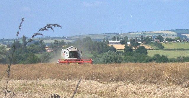 Harvest at Donnington