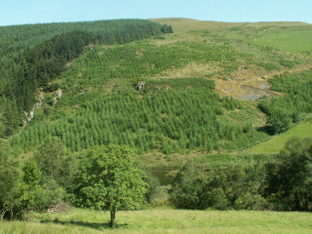 Forestry, Cwm Ceulan