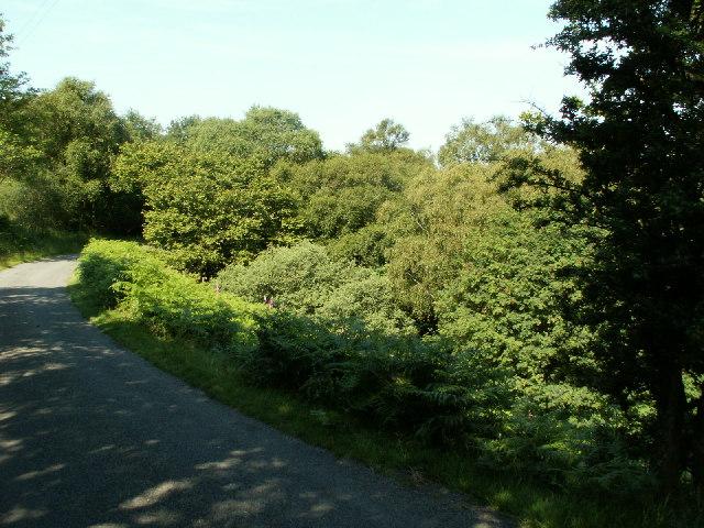 Roadside, Cwm Ceulan