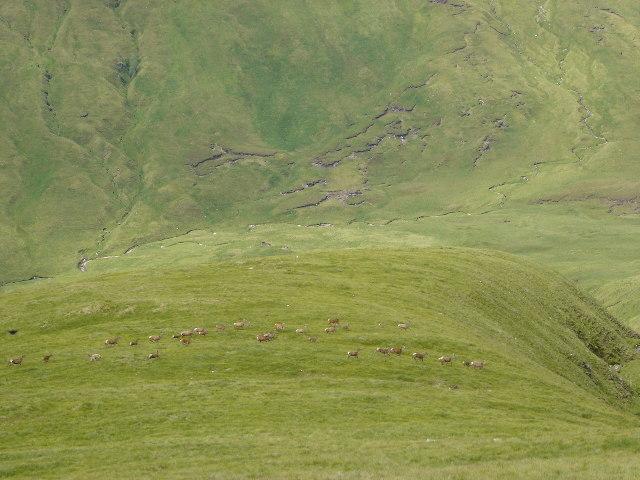 Herd of Red Deer