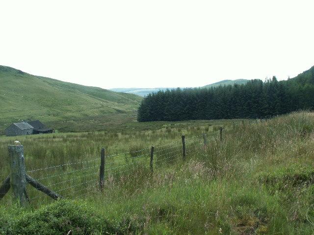 Forestry, Nant Rhuddlan
