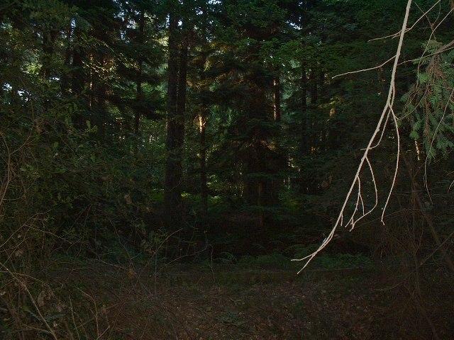 Woods near Chilworth Common