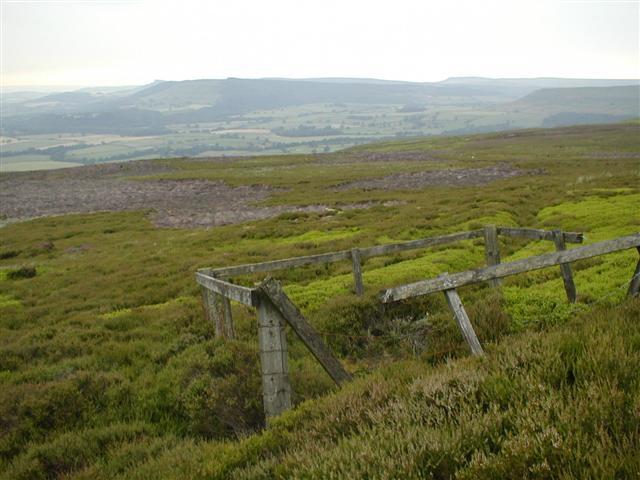 Spring, Ingleby Moor