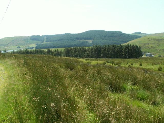 Forestry, Cwm Rheidol