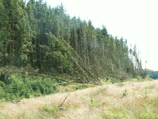 Mature Forestry