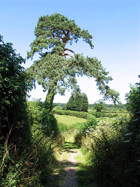 Byway at Hill Bottom near Whitchurch Hill