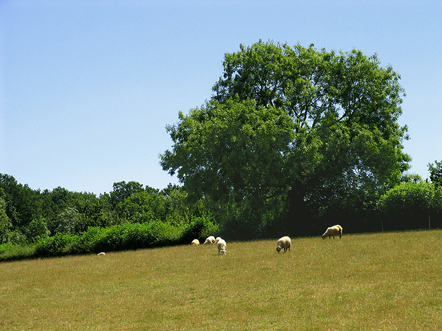 Pasture at Hill Bottom near Whitchurch Hill